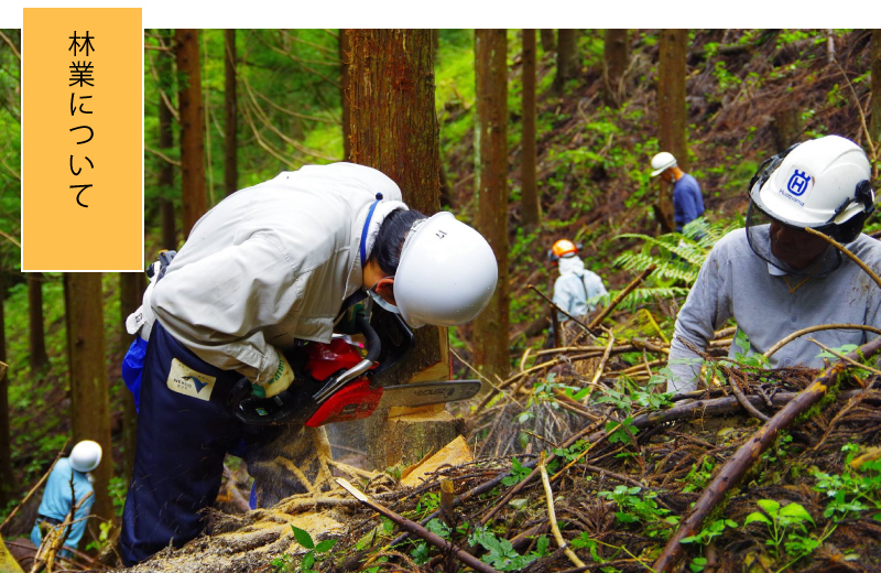 林業について